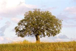 PO98_099-arbre.jpg
