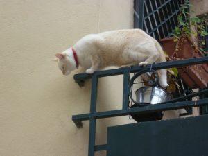 Chat du Gard le funambule