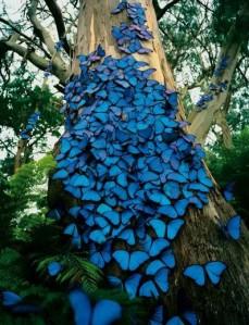 Gladtony-papillons.jpg