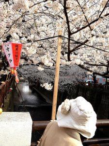 Sakura Jaj 4