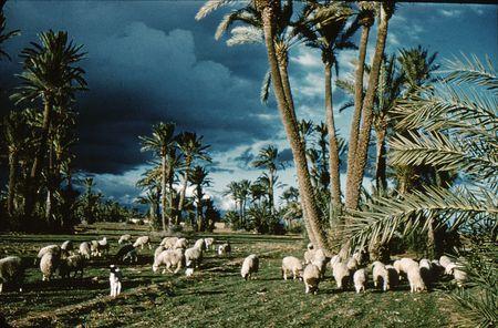 Maurice Calas 1956 Ciel d'orage sur la palmeraie