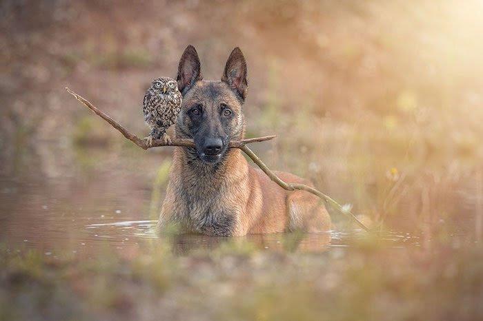 Tanja Brandt . Ingo chien et Poldi chouette