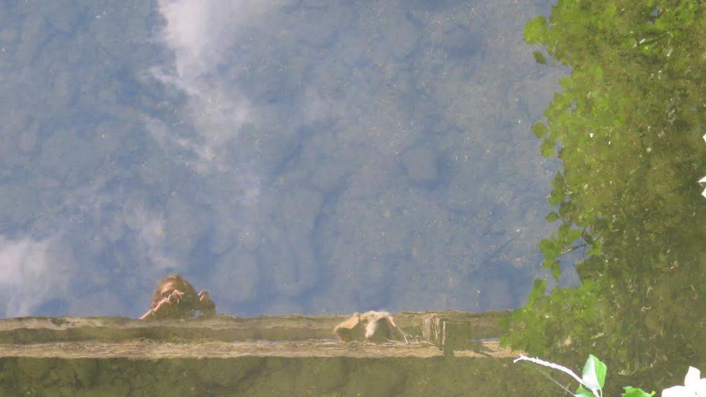 Cla la Dronne et ses reflets