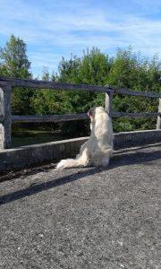 Cla chien sur le pont Bourg